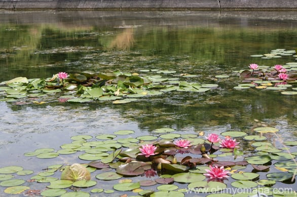 Part of the beauty found at Schramm were the colorful flowers and lily pads in the otherwise stagnant water.