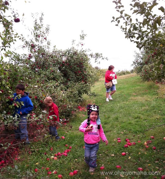 Fall activities in Nebraska and Iowa - Pick apples at orchards. One fo the closest orchards to Omaha is Ditmars Orchard in Council Bluffs, Iowa.
