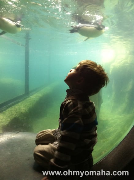 The bubble that juts into the penguin's tank is a popular one. Visit in the winter and your little guy won't have to wait too long to get up close.