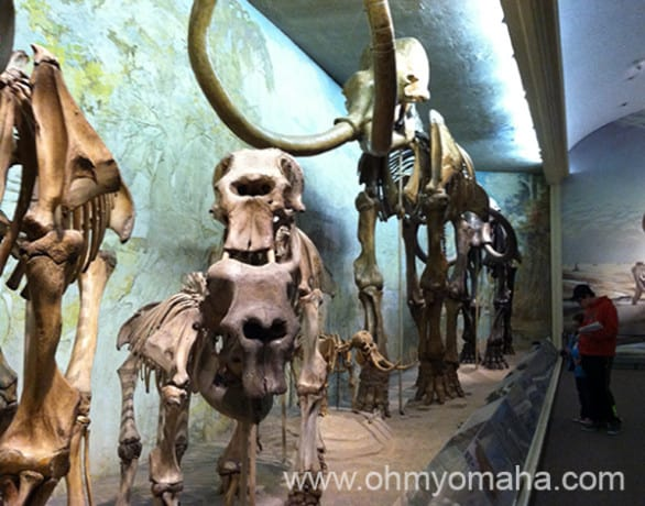 The hall of mammoths at Morrill Hall on the campus of the University of Nebraska-Lincoln.