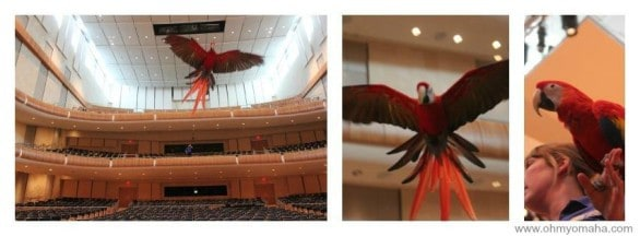 """You'll typically see Penelope at the Omaha zoo's indoor rainforest, but I got a chance to watch her soar through Kiewit Hall inside the Holland Performing Arts Center last week. You'll get to see her, too, if you attend """"Carnival of the Animals"""" on Sunday."""