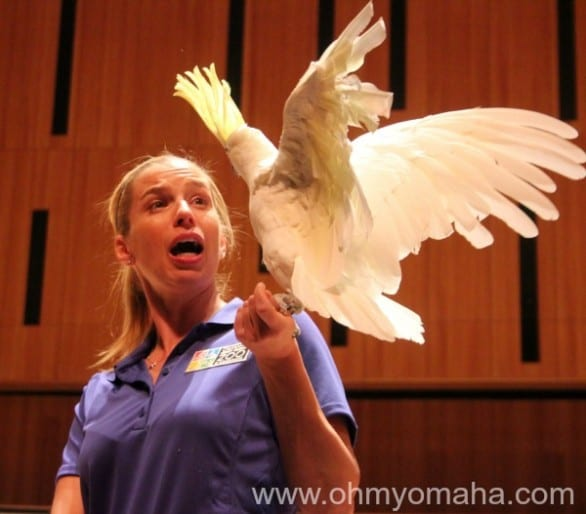 """Foster rehearsing for """"Carnival of the Animals"""" last week. This bird is a total ham and your kids are going to love his """"Ta da!"""""""