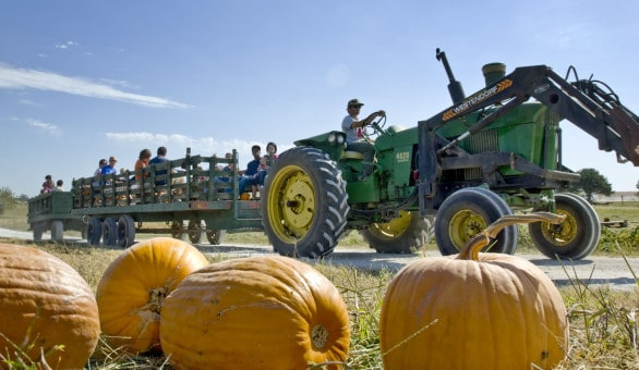 Time your visit right to Bellevue Berry Farm and you can enjoy the pumpkin patch (or berry picking) for less than $25. Photo courtesy Nebraska Tourism