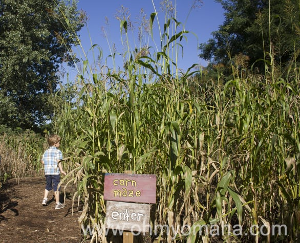 You can't enjoy the corn maze if you go too early in the summer...for obvious reasons.