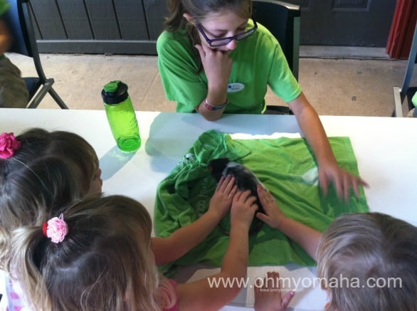 Kids petting a guinea pig at Lincoln Children's Zoo