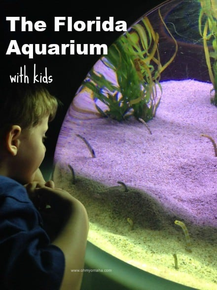 What to expect at The Florida Aquarium in Tampa, especially when you visit with kids | Things kids love in Tampa | Things for kids to do in Tampa | Guide to The Florida Aquarium #familytravel #Florida #Tampa