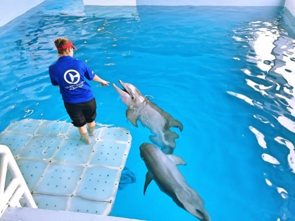 Visiting with dolphins at the Clearwater Marine Aquarium. Photo courtesy Marisa Langford.
