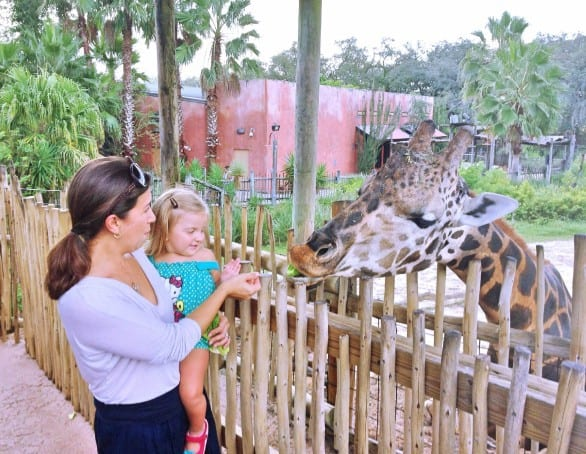 Getting up close to a giraffe at Lowry Park Zoo in Tampa. Photo courtesy Marisa Langford.