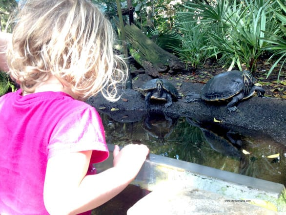 Things to do at The Florida Aquarium - Find the turtles at the Florida Aquarium.