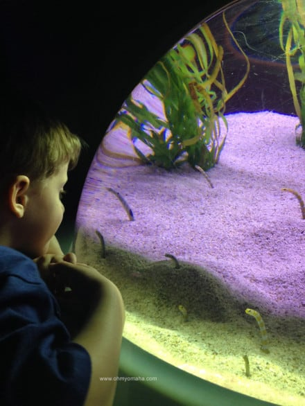 Things to do at The Florida Aquarium - Look for the garden eels.