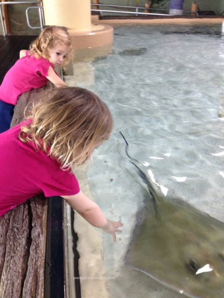 Things to do at The Florida Aquarium - Touch the stingrays at Stingray Beach