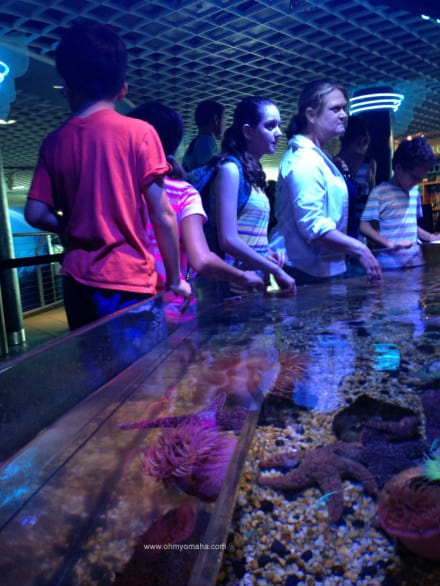 Tips for visiting The Florida Aquarium - The No Bone Zone has touch tank to touch urchin and other creatures without a backbone.