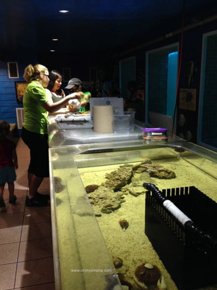 What it's like visiting Clearwater Marine Aquarium - Touch tanks