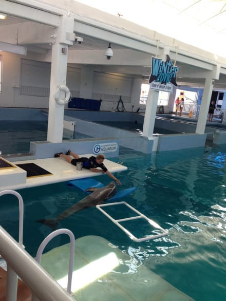 What it's like visiting Clearwater Marine Aquarium - A look at one of the training sessions with a dolphin.