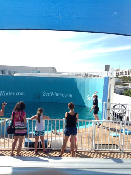 What it's like visiting Clearwater Marine Aquarium - Watch dolphin training sessions