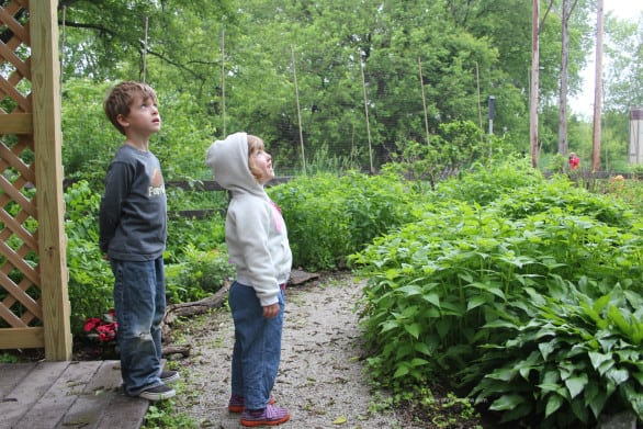 Things to do at Heron Haven - Visit the butterfly garden