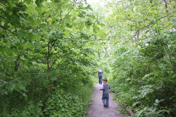 Intro to Heron Haven - A path at Heron Haven, a small wildlife sanctuary in the heart of Omaha