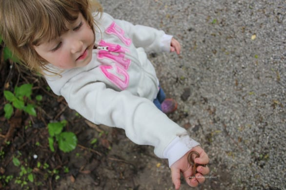 Things to do at Heron Haven - Look for worms.
