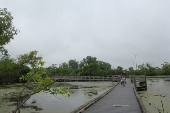 Things to do at Heron Haven - Walk the boardwalk