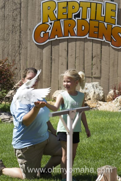 A girl from the audience meets a feathered friend during the bird show at Reptile Gardens in Rapid City, South Dakota.