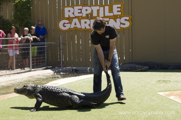 After watching the Alligator Show, my son kept asking me if I knew how to wrestle an alligator. Fat chance, sonny boy.