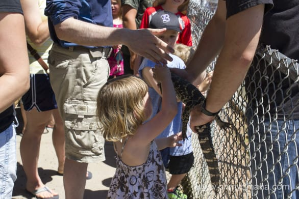 Mooch loved petting the baby alligator.
