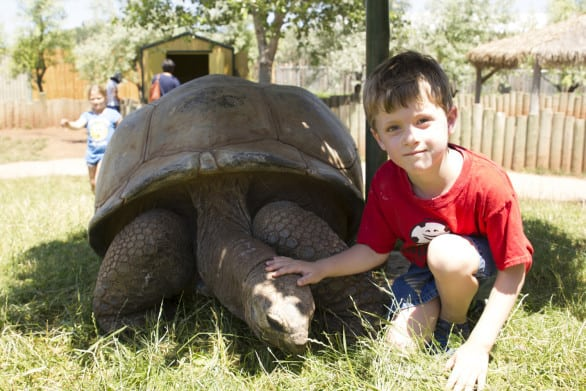 We don't get this close to giant tortoises in Omaha.