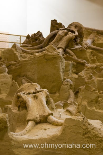 The number of bones uncovered at Mammoth Site is impressive.
