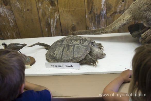 Native animal exhibit at Fort Robinson State Park in Nebraska