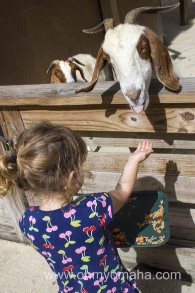 Feeding goats at the Centra Florida Zoo in Sanford, Florida