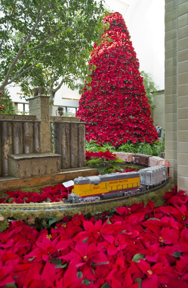Holiday Poinsettia Show at Lauritzen Gardens in Omaha