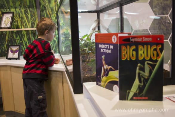 Looking at some bugs in the Discovery Room.