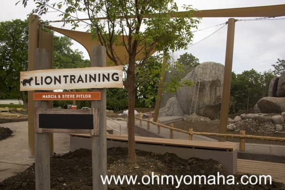 They're putting the finishing touches on the lion training area at the zoo.