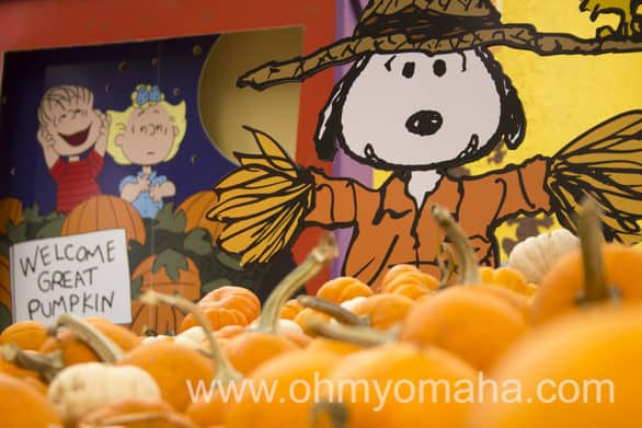 The mini pumpkin patch at Planet Snoopy.