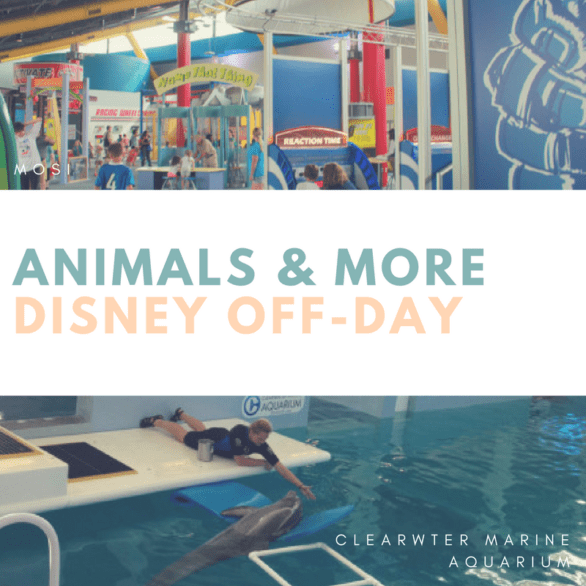 Disney Off-Day - Tips on things to do when you're taking a day off from Disney World. Nearby attractions include MOSI and Clearwater Marine Aquarium (home to Winter!) #Florida #familytravel
