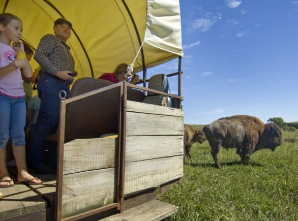 Covered wagon ride tour that gets you close to bison