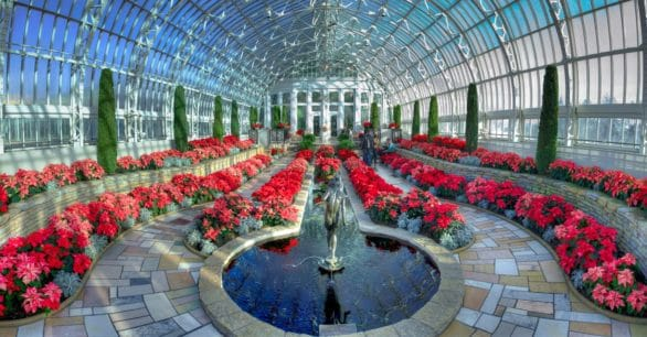 Poinsettias at the Marjorie McNeely Conservatory in Minnesota