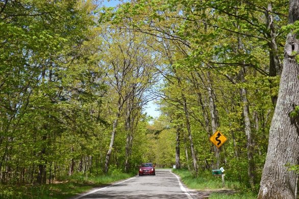 One of the most scenic drives in Michigan is along M-119, also known as the Tunnel of Trees.