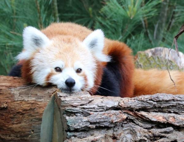 Omaha Zoo Free Days