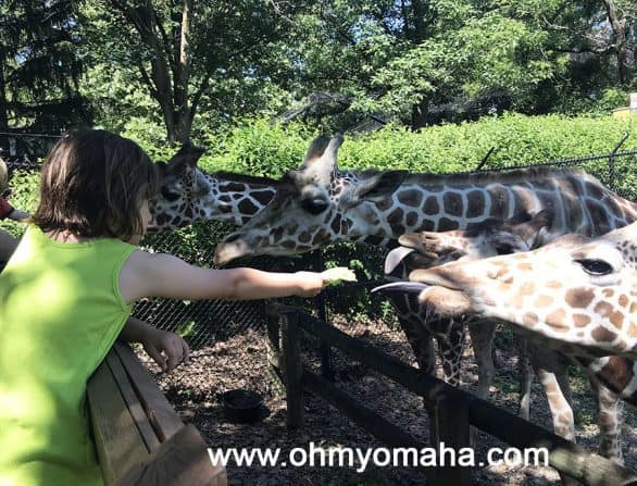 Feeding giraffes at Blank Park Zoo in Des Moines, Iowa