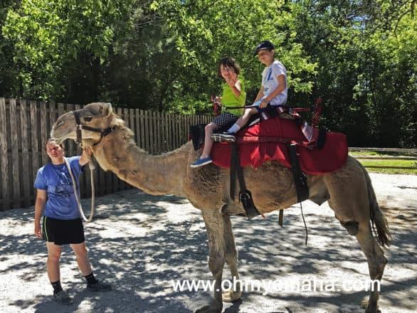 Des Moines Zoo Camel Ride