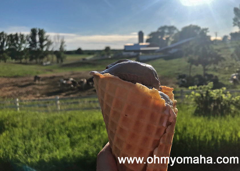 Where to get ice cream in Traverse City, Michigan - Moomers is a world famous ice cream shop located near a dairy farm.