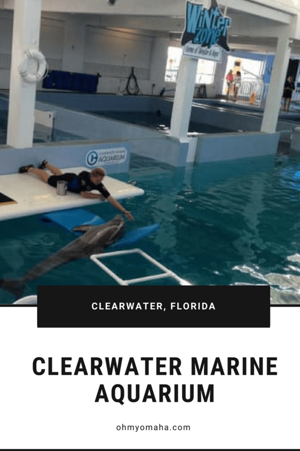 What to expect when you visit Clearwater Marine Aquarium - the home to Winter the dolphin #Florida #TampaBay #familytravel