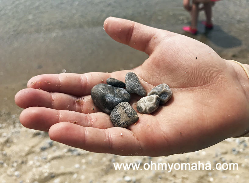 Things to do in Petoskey - Hunt for Petoskey stones