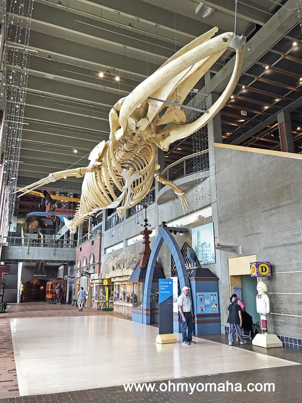 Sperm Whale skeleton in the main hall in Grand Rapids Public Museum