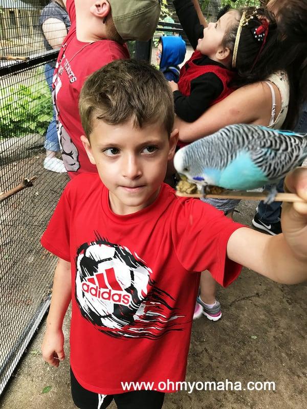 Feeding a budgie at John Ball Zoo in Grand Rapids, Michigan
