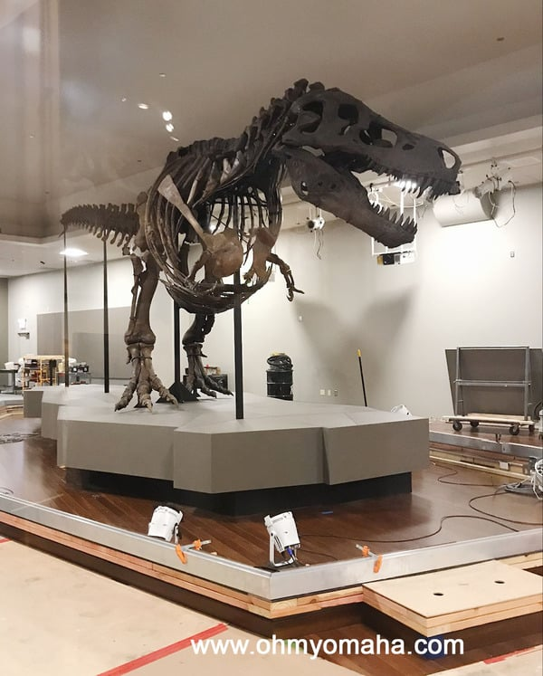 SUE the T.rex at The Field Museum i