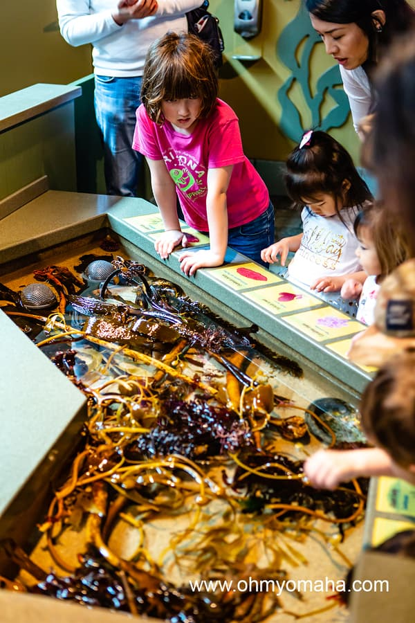 Kids at the touch tank at Monterey Bay Aquarium in California