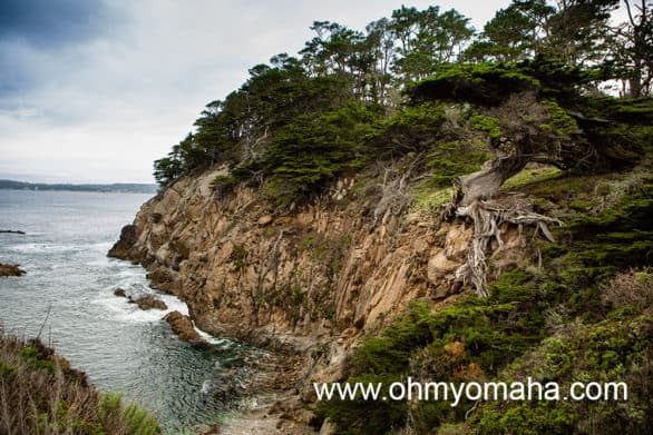 Things to do at Point Lobos - See Old Veteran Cypress, a much-photographed old cypress tree
