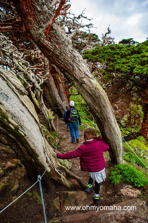 Things to do at Point Lobos with kids - Hike the Cypress Grove Trail